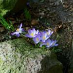 MP in Planten un Blomen mit der Nikon D70