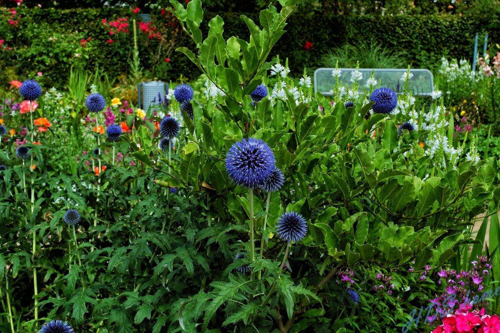 Aufgenommen in Planten un Blomen, bearbeitetmit der NIK Collection
