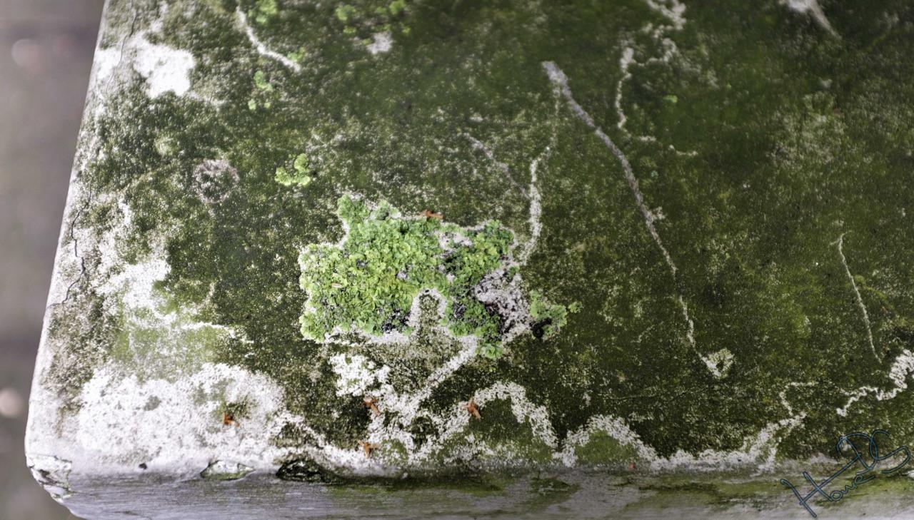 Natürlich entstandenes Graffiti in Rotherbaum